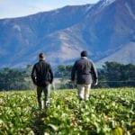 Agrarian-rural-sales-problem